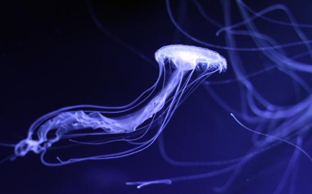 Mika Ninagawa x SUMIDA Aquarium Jellyfish kaleidoscope tunnel12